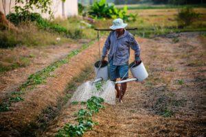 Averbação de Tempo Rural para Aposentadoria por Tempo de Contribuição